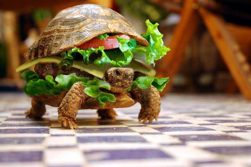 A rare but delicious turtle burger